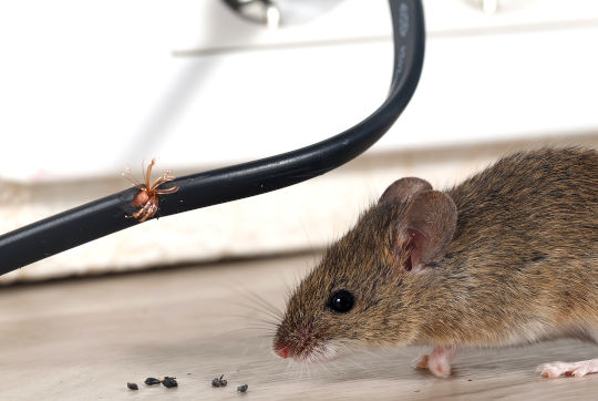 Rodent Control Hampshire